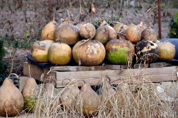 Gourd Pallet