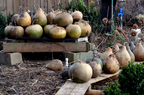 Gourd Curing Pallet