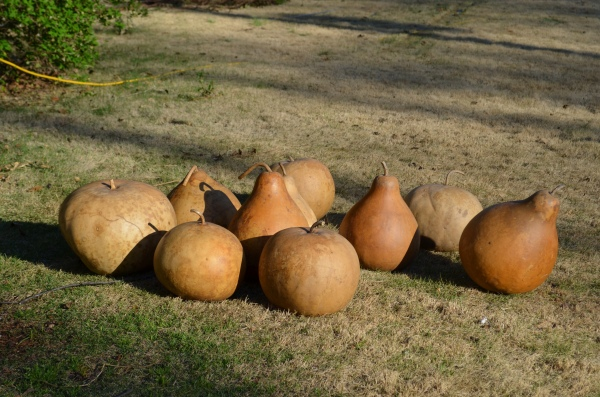 Gourds, scrubbed clean