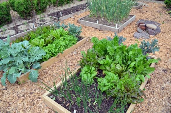 More Spring Salad