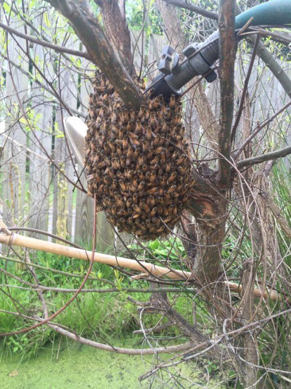 Spring swarm #1