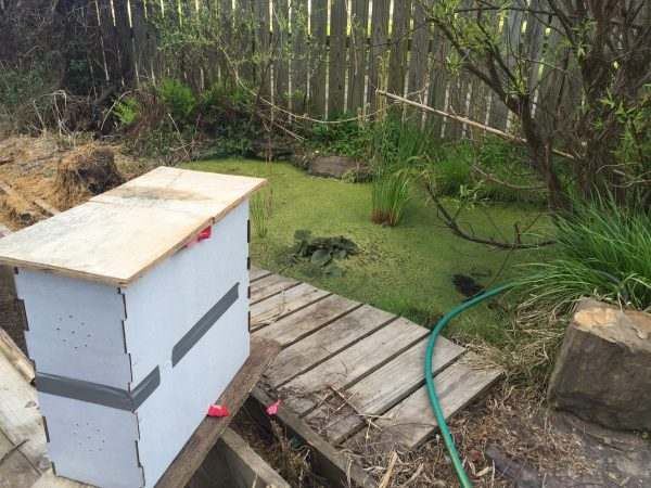 Temporary swarm  hive box