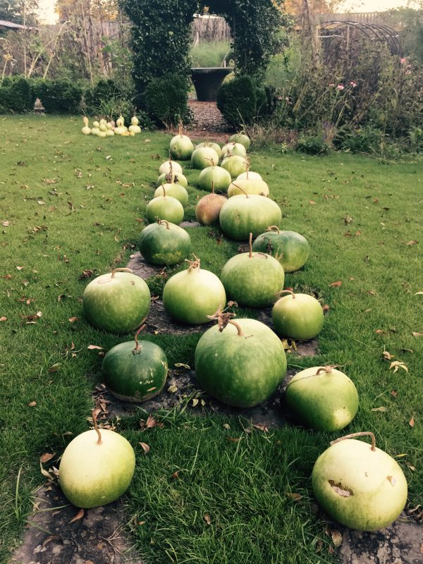 End of season gourds moved to dry on the stepping stones for the winter